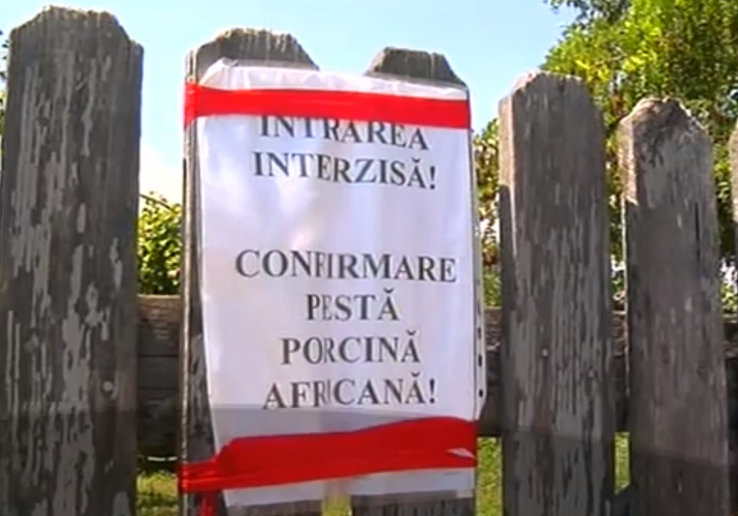 Pesta porcină africană - Dambovita